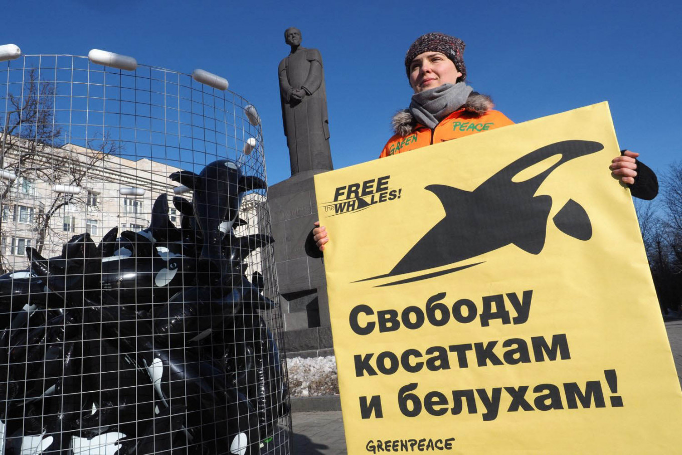 Greenpeace Demands Release of Whales Held Captive in Russia