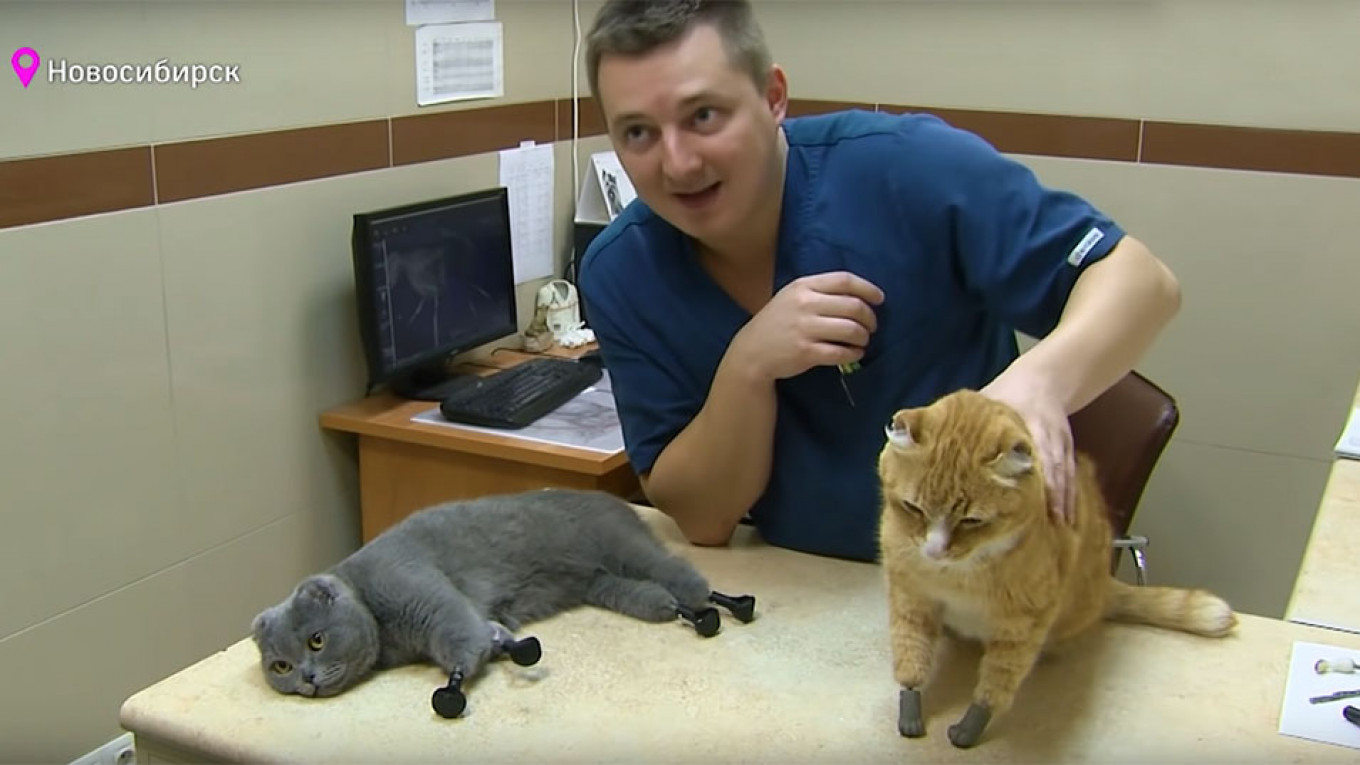 Veterinarian Sergei Gorshkov with Dymka and Ryzhik, the two cats with four bionic paws that he's treated.				 				Screenshot Youtube / TV 360