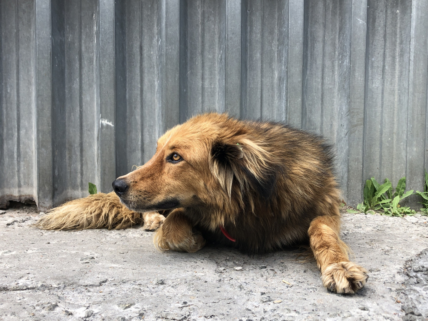 With winter temperatures averaging below freezing, even dogs with long fur are unable to withstand conditions in northern Ukraine if they don't have shelter. SPCA International