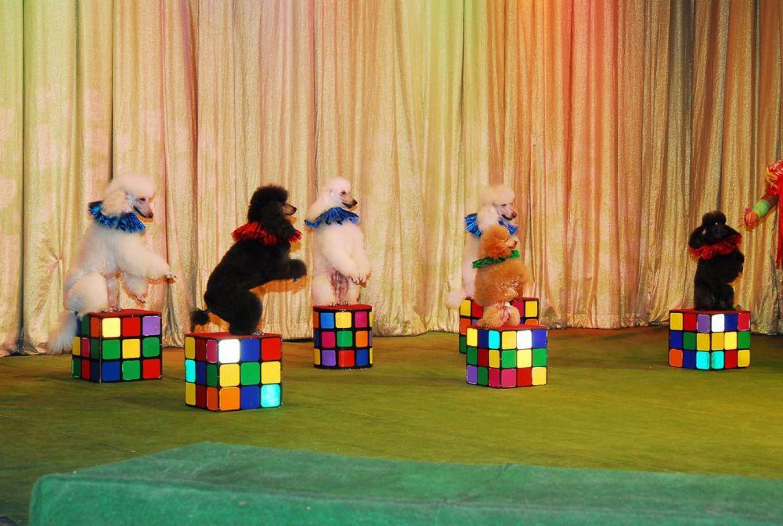 Grandpa Durov's Circus Theater  ugolokdurova.ru