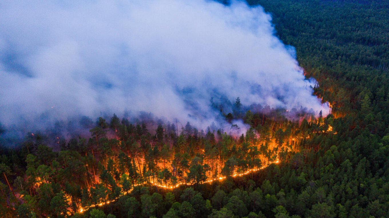 Wildfires in Siberia. Greenpeace Russia