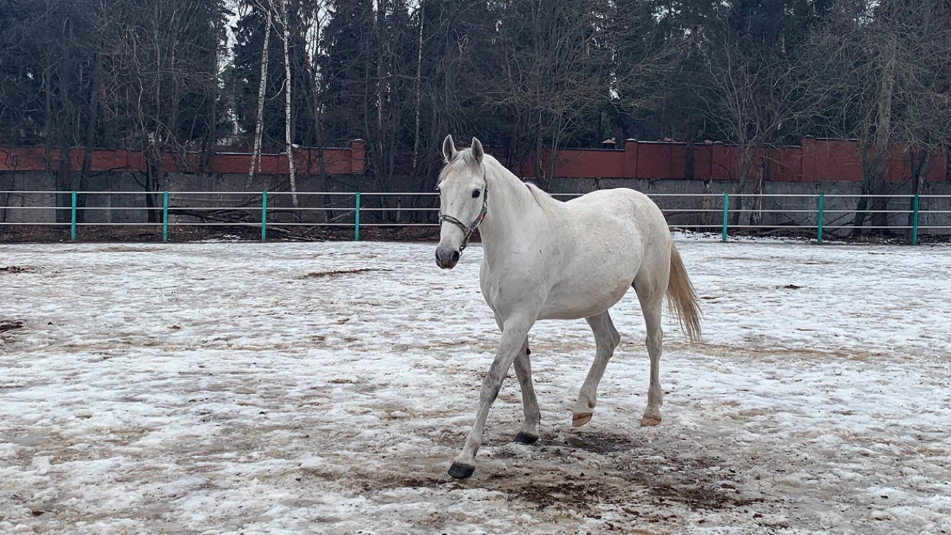 How North Korea S Leader Buys Purebred White Horses From Russia S Stud Farms The Moscow Times