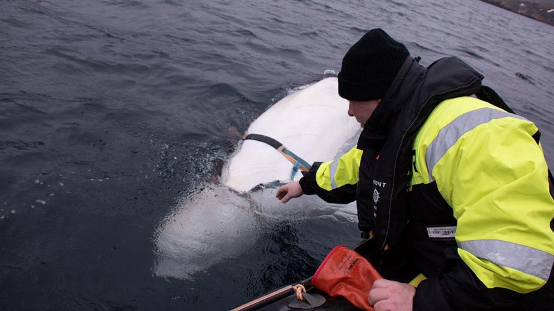 Jørgen Ree Wiig / Fiskeridirektoratet