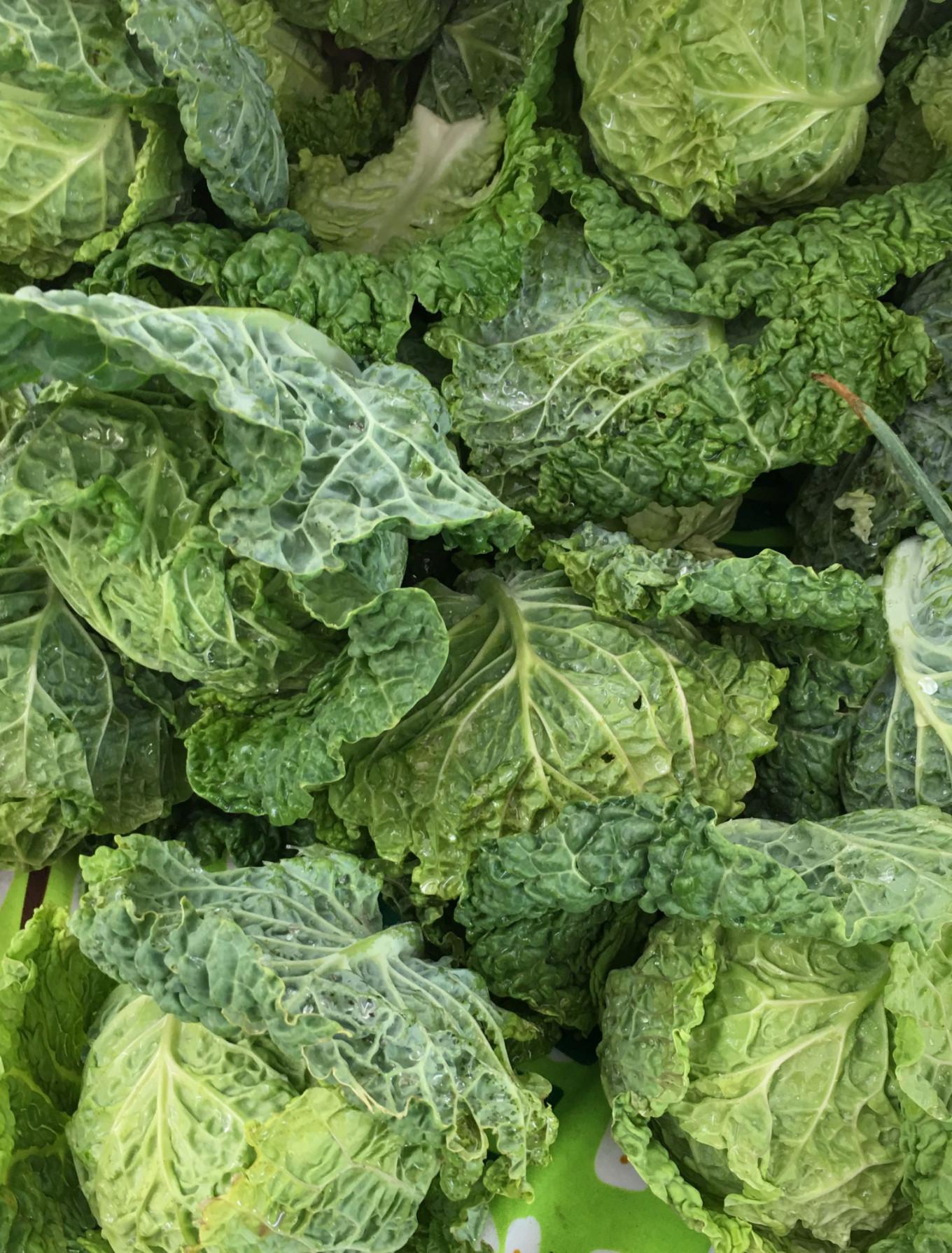 Green leaf cabbage  Jennifer Eremeeva / MT