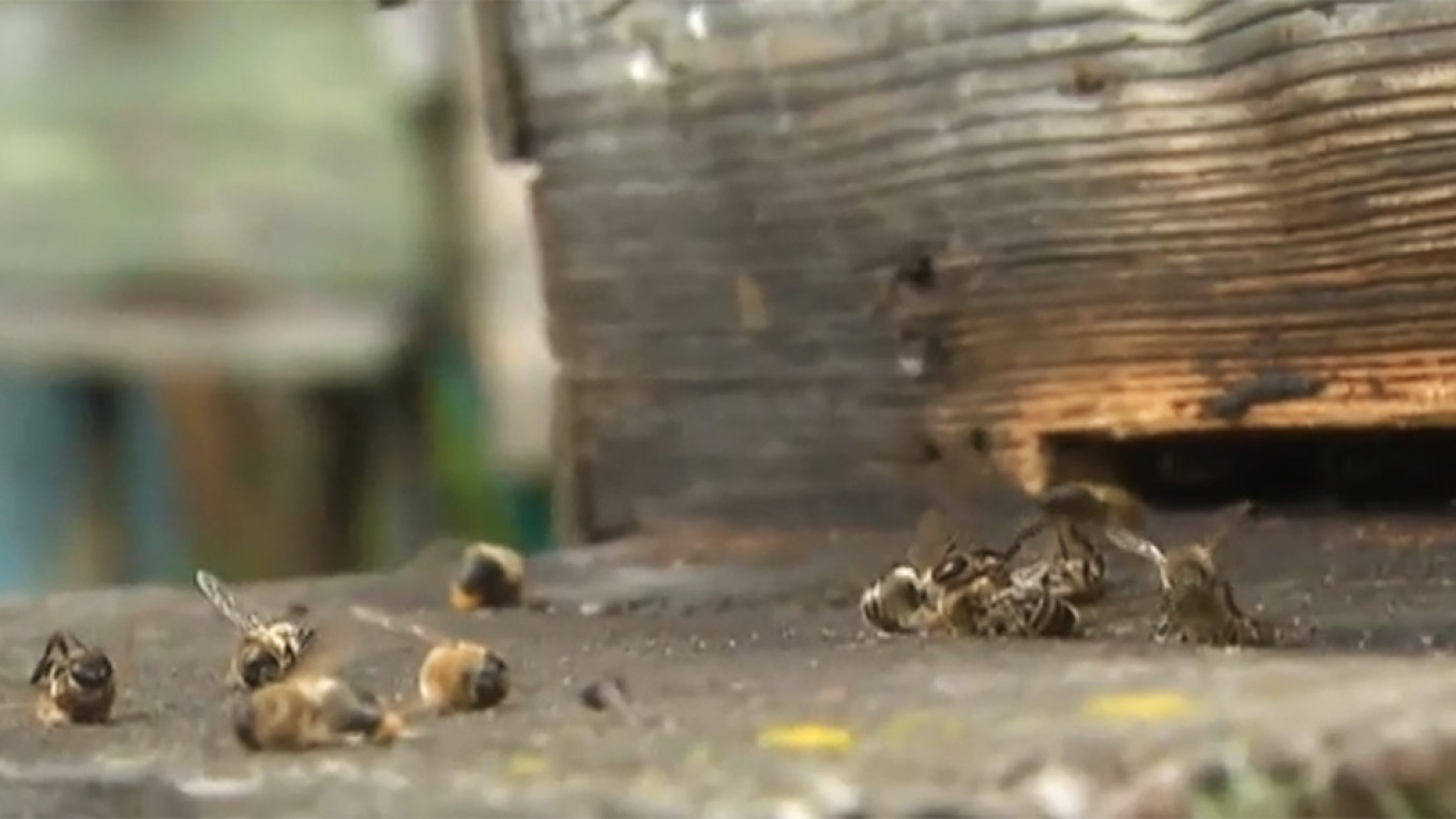 Around the world, bee experts say climate change is having an effect on population losses. Rossia-24