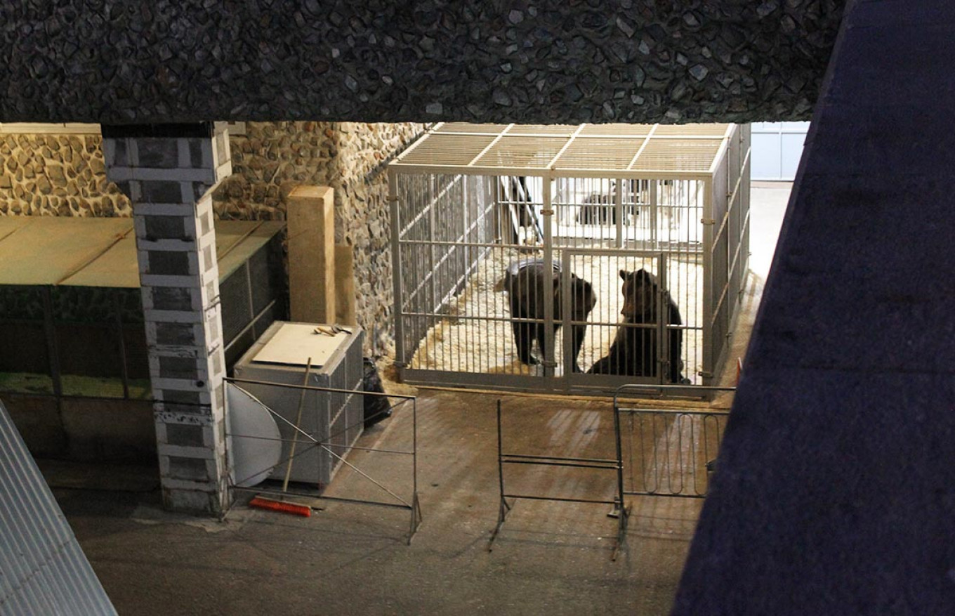 Caged bears in an enclosure near the Moscow State Circus. Alexandra Sukhoveeva / MT