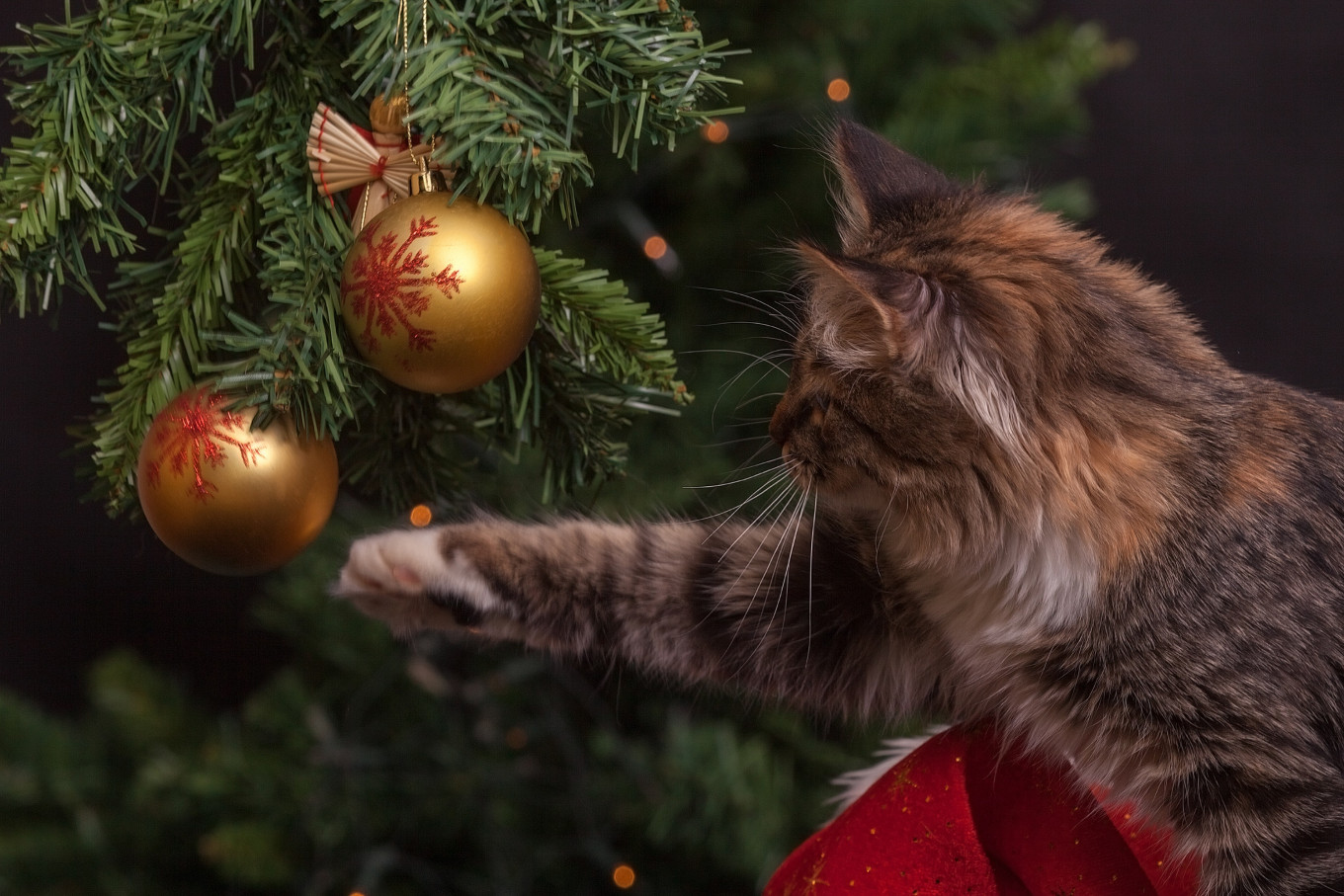 Let your pets destroy your tree in peace and quiet. Pexels