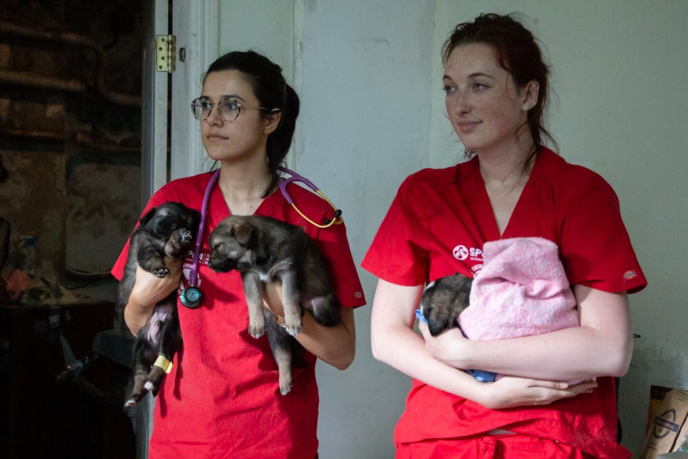 Volunteers hold puppies as they await medical treatment. SPCA International