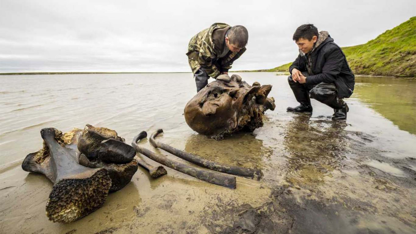 Well-Preserved Mammoth Discovered in Russian Arctic as Permafrost Thaws