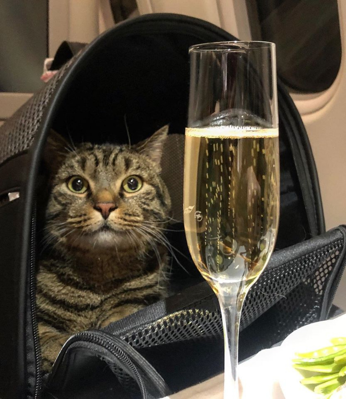 Viktor and his owner Mikhail popped champagne once comfortably seated in business class. facebook.com/mikhail.galin.7