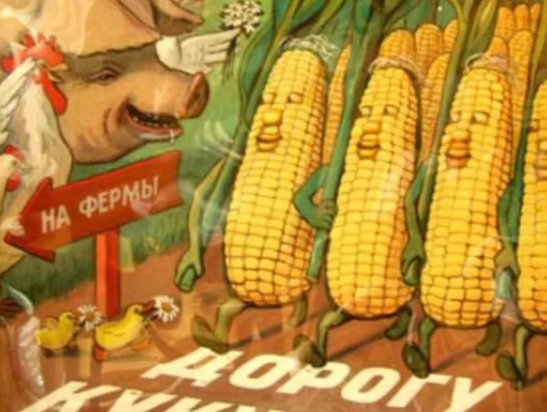 Corn to the farm