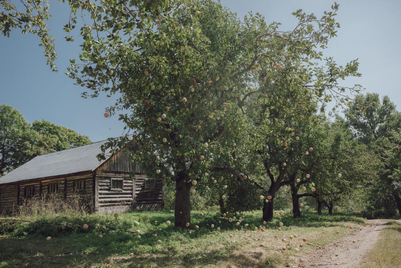 Yasnaya Polyana has more than 40 acres of orchards where more than 33 varieties of apple grow. Daria Trofimova / Yasnaya Polyana