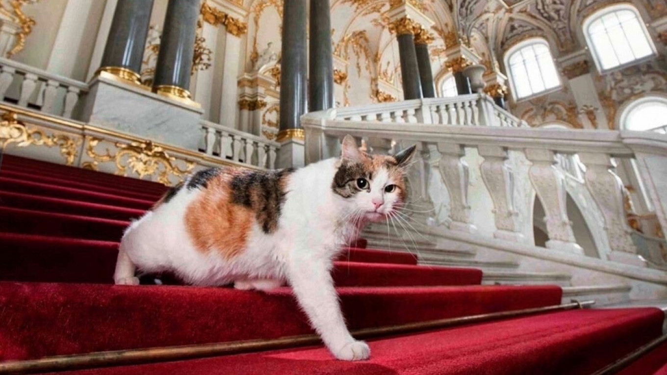 Frenchman Leaves Inheritance to St. Petersburg's Hermitage Cats - The Moscow Times