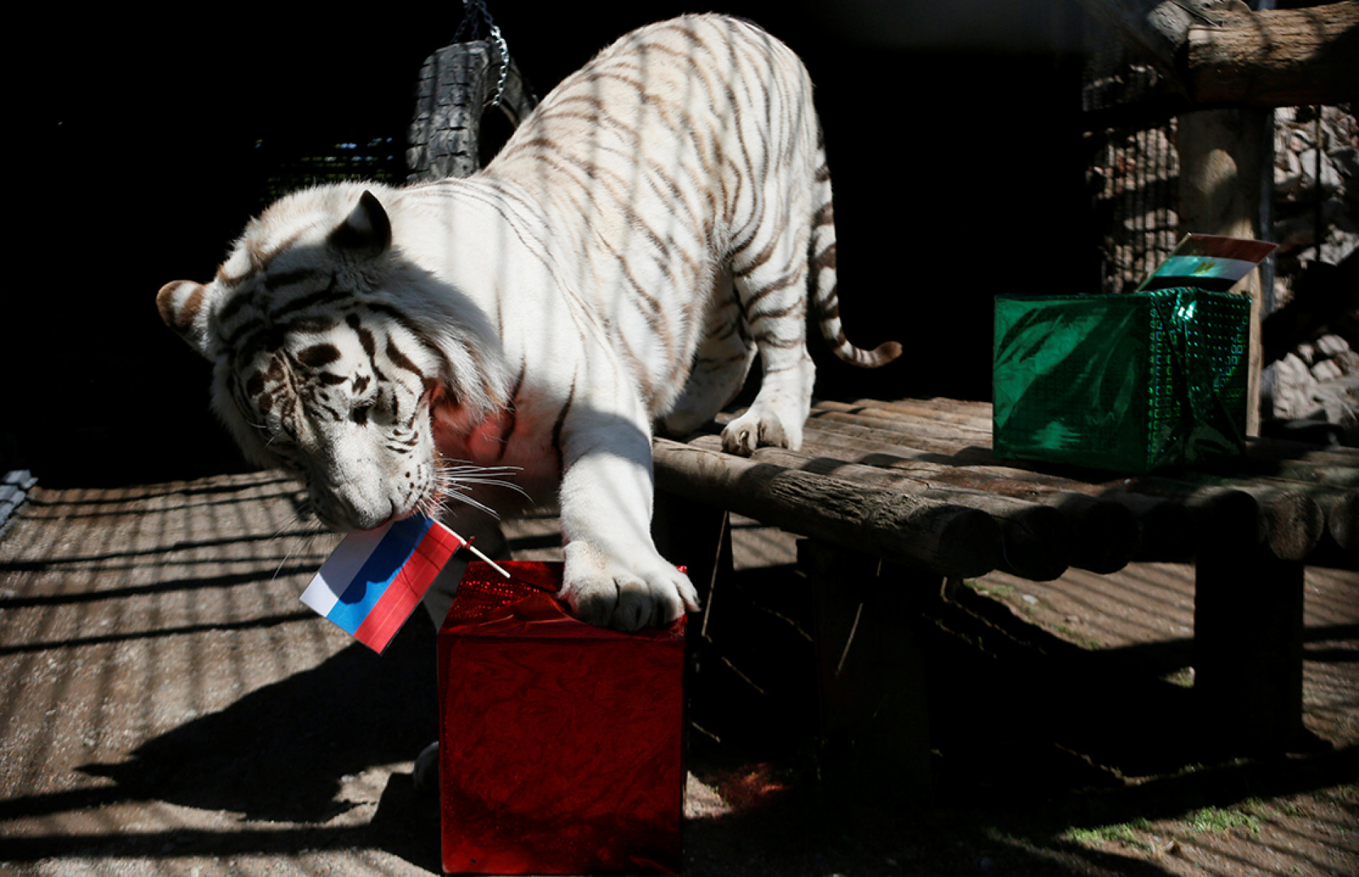 The Furry Fortune Tellers of the World Cup