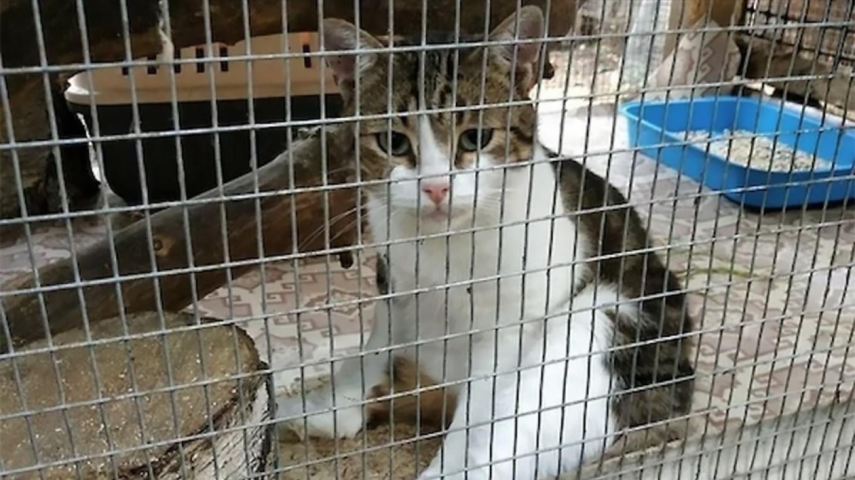 Feline Felon's Escape Risks Unraveling Russian Drug-Smuggling Case