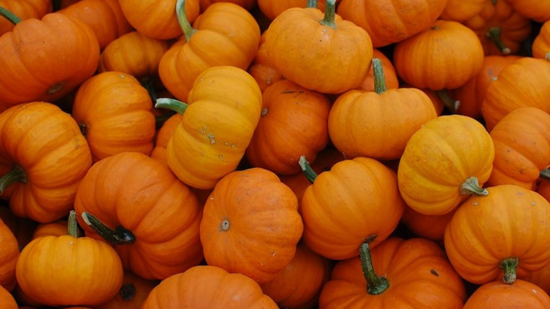 Russia to Add Turkish Zucchini and Pumpkins to Food Embargo