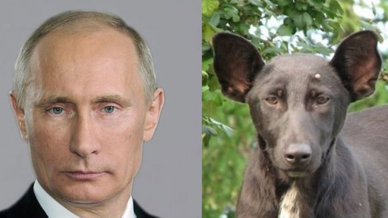 Image result for putin dog""
