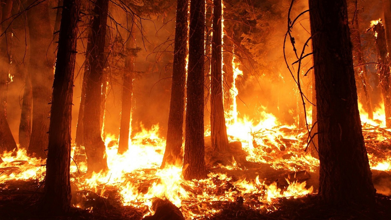 Siberian Wildfires Swell to Crimea-Sized Area, Authorities Say  Extinguishing Them Is 'Pointless' - The Moscow Times