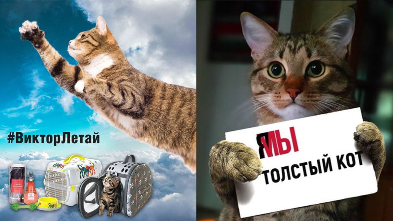 Russian Internet Explodes With Memes After Aeroflot Cracks Down on Fat Cat