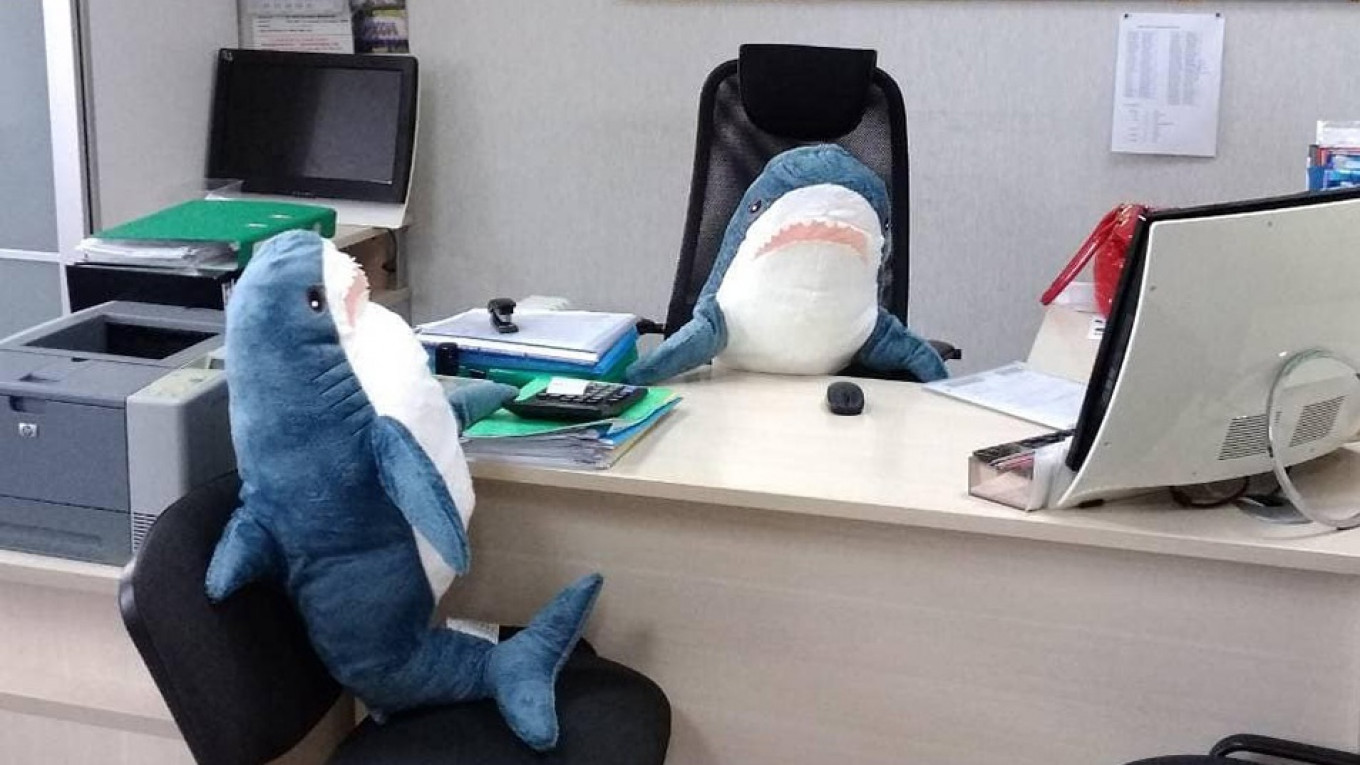 Shark Attack Russia Goes Wild For Memes With Ikea Sharks