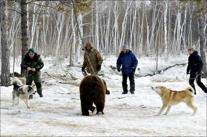 bear-wolf-3.jpg