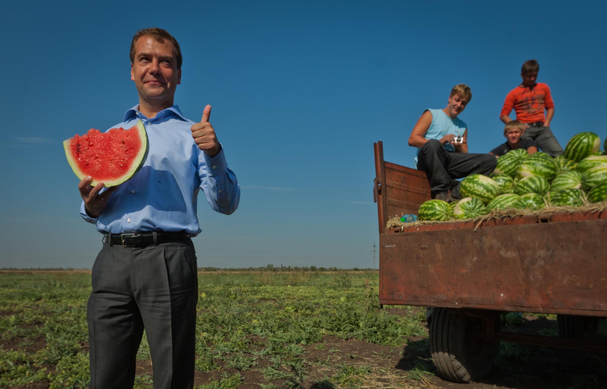 Прикольные картинки сбор урожая, смешные